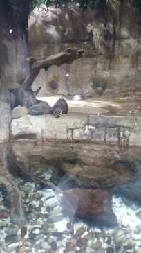 the otters were so cute