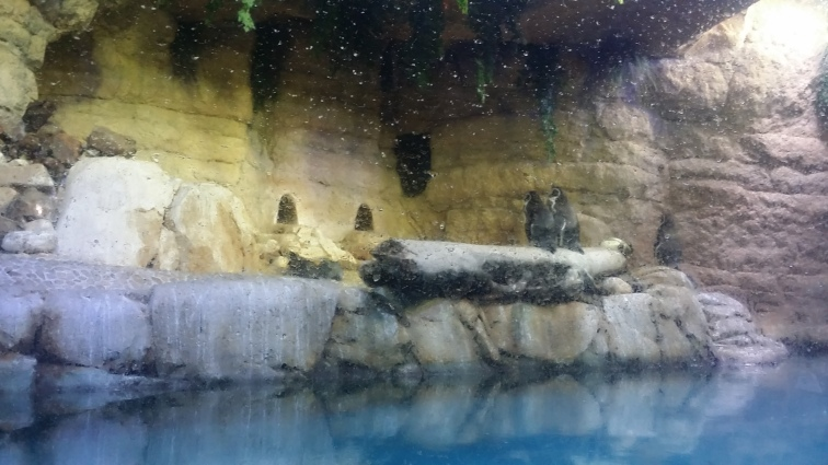 They even had penguins